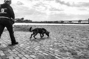 Hondenhof